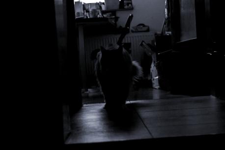 silhouette_18_014a