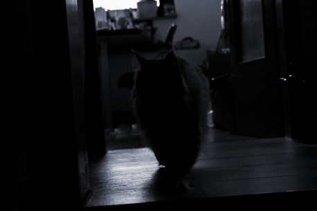 silhouette_18_014b